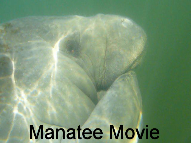 Manatee Movie